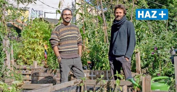 Baulücke in Hannover macht es möglich: Grüne Oase in der Calenberger Neustadt