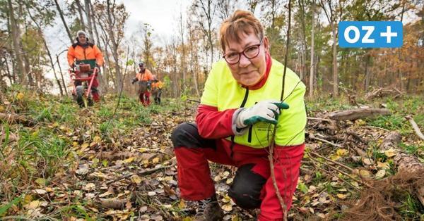 MV-Pflanztage abgesagt: Das passiert mit den Spenden für den Wald