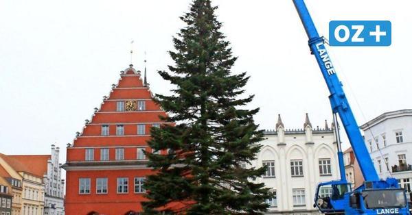 Lichterglanz: Greifswald bekommt am Mittwoch seinen Weihnachtsbaum