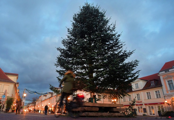 Potsdams Weihnachtsbaum 2020. Foto: Bernd Gartenschläger