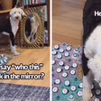 TikTok User Teaches Their Dog To Talk Using Buttons, Gets Surprised When She Asks Who She Is