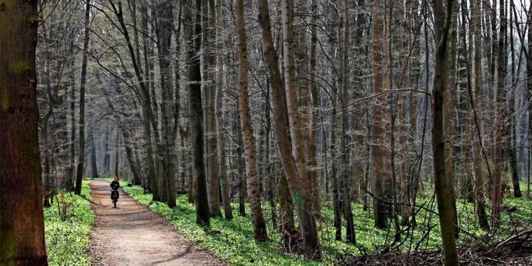 Spaziergang durch den Leipziger Auwald. Foto: dpa