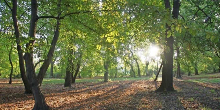 Am Mariannenpark geht es los auf einen Spaziergang entlang der Parte. Foto: Andre Kempner