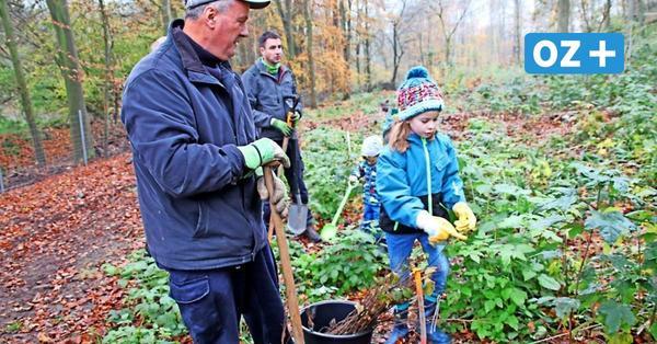 Helfer gesucht: Wald bei Neuburg wird am Sonnabend weiter aufgeforstet