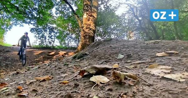 """Auf zum """"Fuchsbau"""": Darum lohnt sich für Kids eine Wald-Tour in Grevesmühlen"""