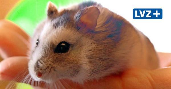 Haustier-Serie für Kinder: Hamster - kleine Nager mit großen Bedürfnissen