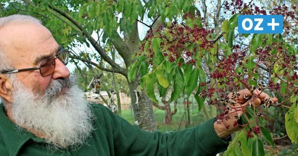 Rettung für die Bienen: Wie ein Daskower Imker den Insekten helfen möchte