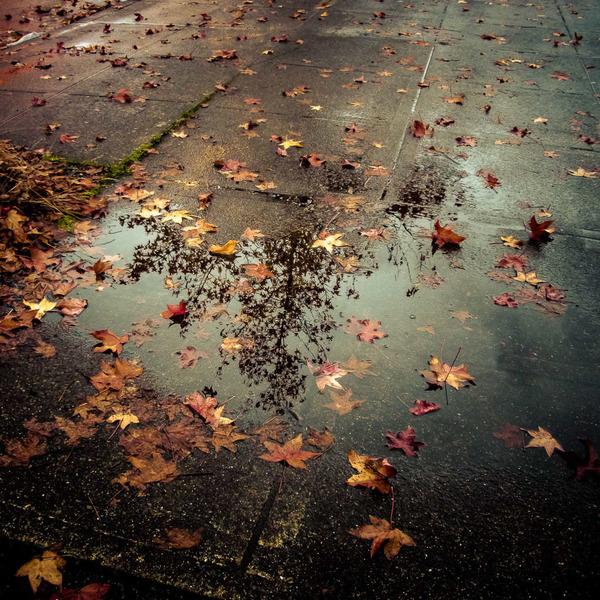 Autumn Sonata, New York City, November 2012