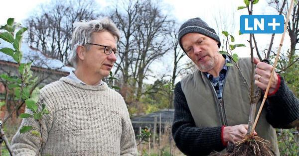 Pomarium Wulfsdorf: Hier gibt es Äpfel aus der Vergangenheit