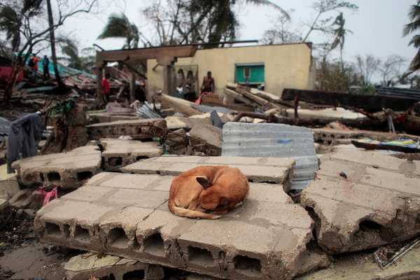 """""""A dog sleeps over the debris of a house destroyed by Hurricane Iota in Puerto Cabezas."""" [Oswaldo Rivas/Reuters]"""
