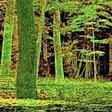 """Projekt """"Digital Forest"""" erhält Förderung"""
