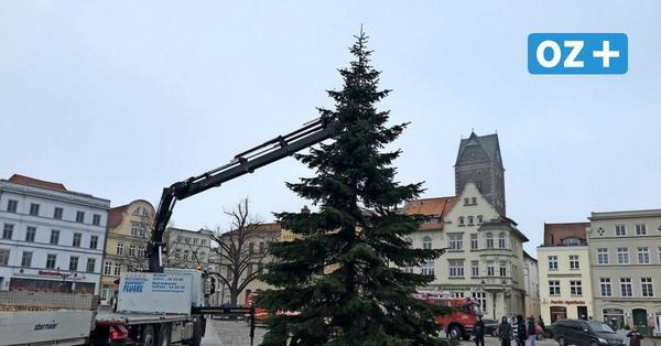 Video zeigt: So ist Wismars Weihnachtsbaum auf den Markt gekommen