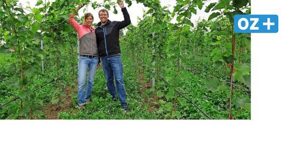 Schon 100 Vorbestellungen: Bald gibt es den ersten Wein aus Dorf Mecklenburg