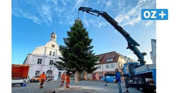 Blautanne ziert als Weihnachtsbaum den Wolgaster Rathausplatz