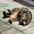How To Display Vision Bounding Boxes