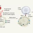 Engineered antibodies to combat viral threats