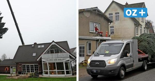 Riesige Weihnachtstanne: So ist der Baum von Herrnburg nach Schönberg gekommen