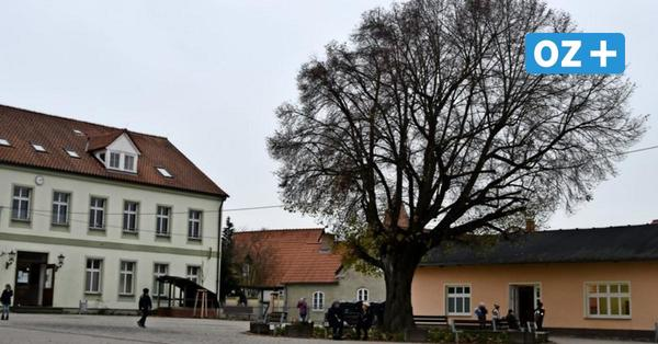 Mit Baumpflanzung beendet: Umbau der Wanderschule in Grimmen abgeschlossen