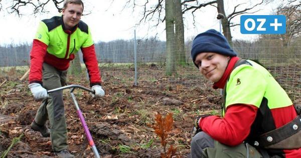 Grünes Greifswald: 85 000 Baumpflanzungen bis zum nächsten Jahr