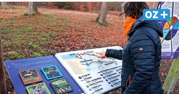 Spannung und Spiel im Wald: Das bietet des Entdecker-Pfad in der Rostocker Heide