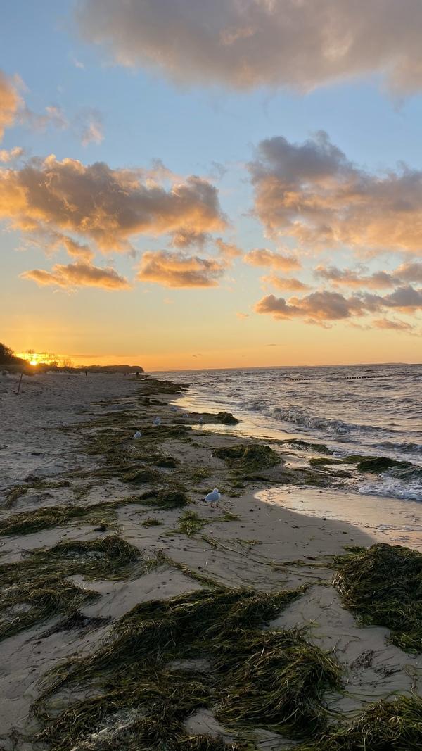 Strandspaziergang auf der Insel Poel (Foto: Vanessa Bahr)