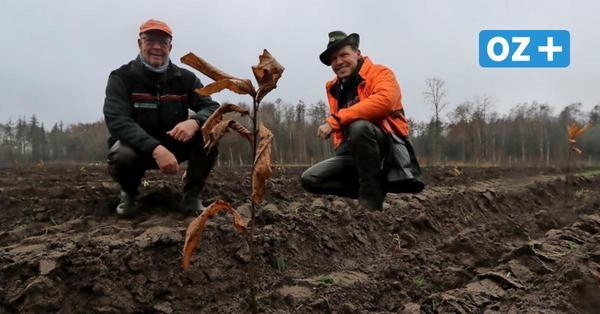 Beiershagen bei Ribnitz-Damgarten: Wie ein neuer Wald entsteht