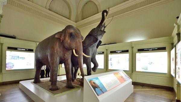 Un éléphant à Tournai! Een olifant in Doornik!