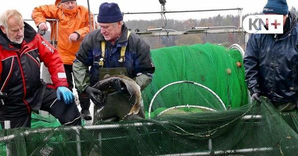 Wegen Sanierung des Mözener Sees mussten 3,5 Tonnen Fische umziehen