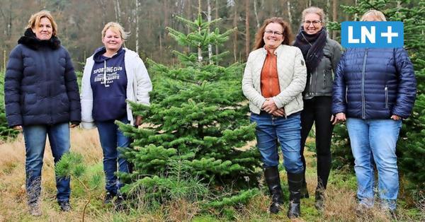 Die Weihnachtsbaum-Saison im Kreis Herzogtum Lauenburg ist eröffnet