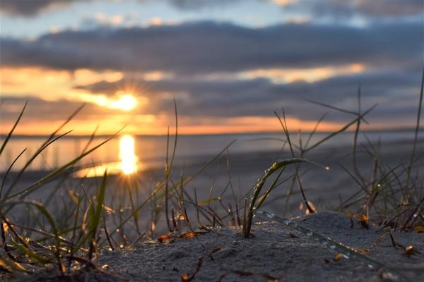 Glitzernde Winter-Natur im Morgengrauen (Foto: Corinna Schaak)