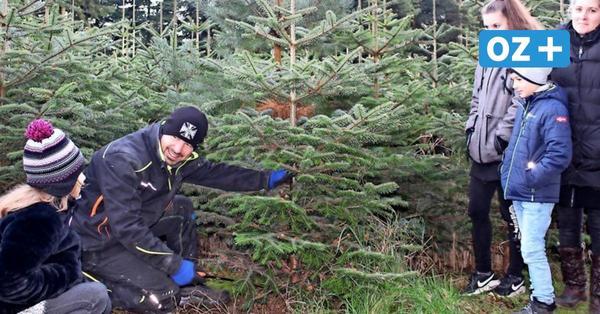 Region Bad Doberan: Hier können Sie jetzt einen Weihnachtsbaum kaufen
