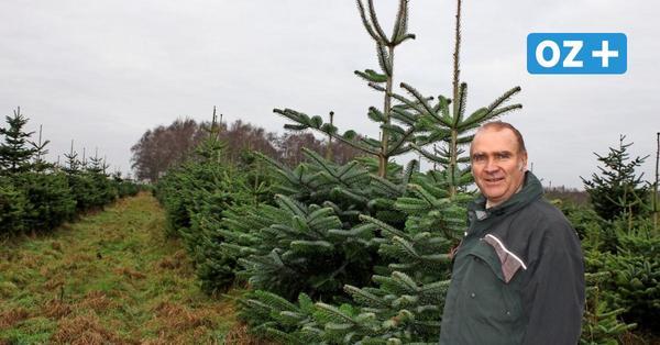 Neu Pudagla: Ab 9. Dezember Weihnachtsbaumverkauf im Forstamt