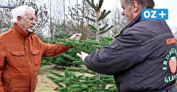 Grevesmühlen und Umgebung: Hier bekommen Sie Ihren Weihnachtsbaum