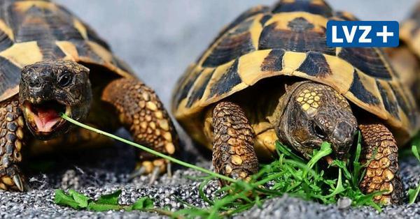 Haustier-Serie: Schildkröten – langlebige Begleiter