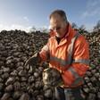 Loeren bij de boeren: 'Iedereen hoopte dat de prijs van suikerbieten zou stijgen'