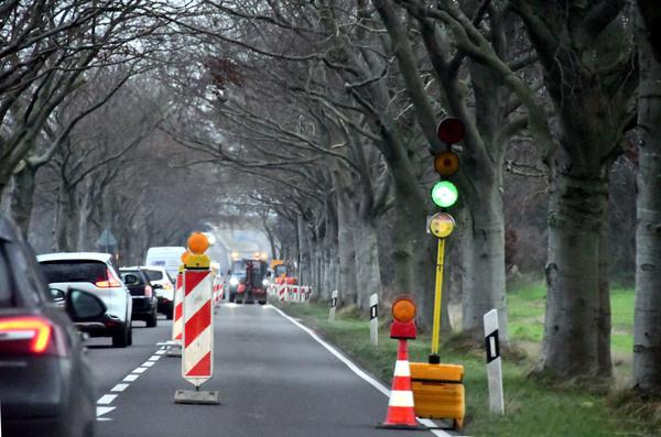 Baumpflegearbeiten zwischen Karow und Prora (Foto: Uwe Driest)
