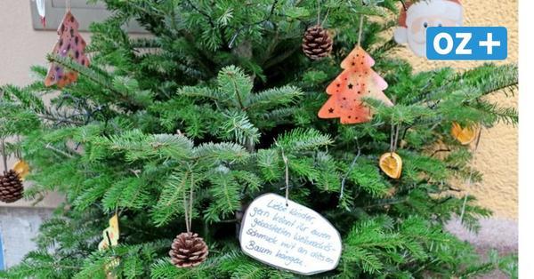 OZ-Kolumne aus Stralsund: Ein Weihnachtsbaum mit Einladung