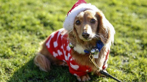 Alternative zum Haustier Verschenken: Eine Tierpatenschaft als Geschenkidee