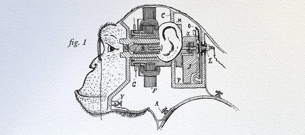 Electrical Chimp