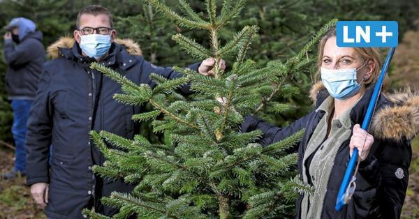 Lockdown-Sorgen in Ostholstein: Hier gibt's noch Weihnachtsbäume