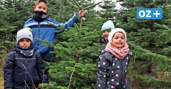 Sievertshagen: Auf der Suche nach dem perfekten Weihnachtsbaum