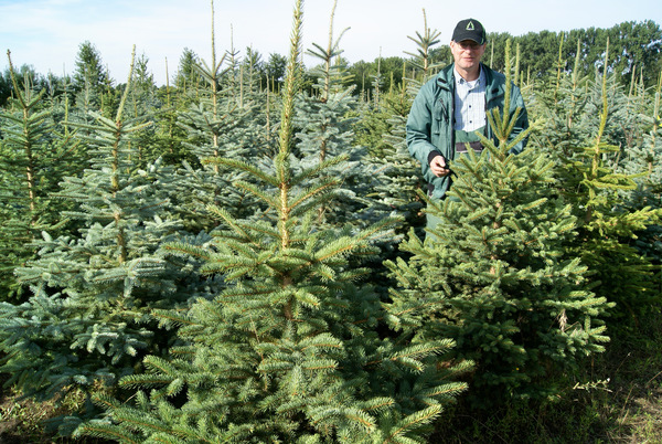 Jörg Martin inmitten seiner Weihnachtsbäume. Foto: Udo Böhlefeld