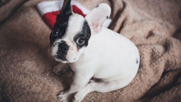 Tiere verschenken an Weihnachten? Vermittlungsstopp bei Tierheimen – darum geben Tierheime vor dem Fest keine Tiere mehr heraus