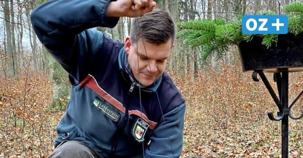 Abtshagen: Hier finden immer mehr Menschen ihre letzte Ruhe im Wald