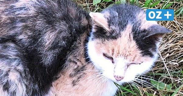 Verwahrlost, angefahren und liegengelassen: Greifswalder Tierrettung nimmt Katze auf