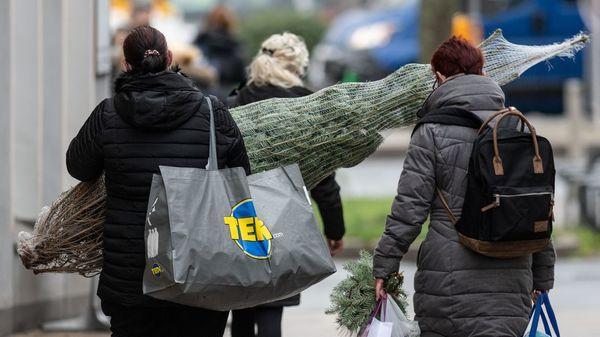 Weihnachtsbaum-Test: Naturschützer prüfen 23 Tannenbäume auf Pestizide - und finden Giftrückstände