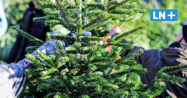 Lübeck: Hier gibt es Weihnachtsbäume trotz Lockdown