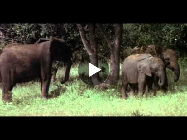Animals Are Beautiful People - Trailer