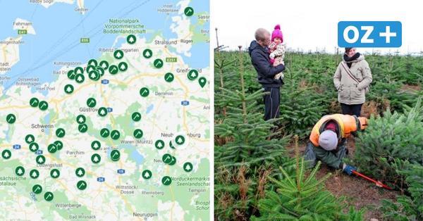 Karte mit Adressen: Hier können Sie jetzt noch in MV einen Weihnachtsbaum kaufen