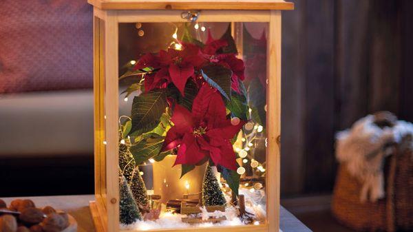 Winterwunderland: für Freunde und Familie Minipflanzen basteln